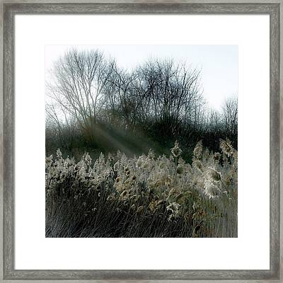 Framed Print featuring the photograph Winter Fringe by Kendall McKernon