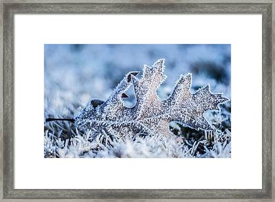 Winter Frost Framed Print