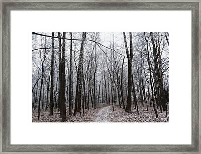 Winter Frost Trees  Framed Print by Marfffa Art