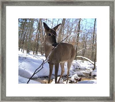 Winter Fun Framed Print by Bill Stephens