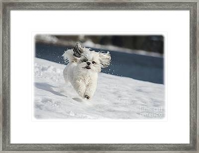 Winter Fun Framed Print by Joy McAdams