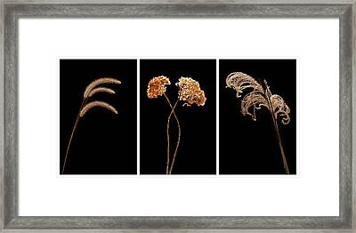 Winter Garden Triptych Framed Print by Steve Gadomski