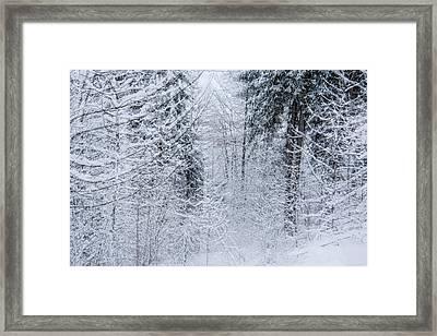 Winter Glow- Framed Print