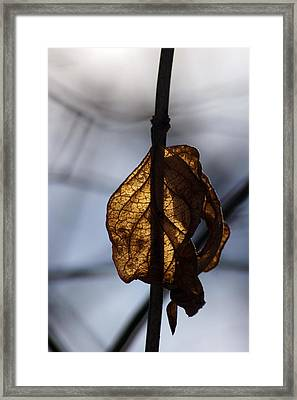 Winter Glow Framed Print by Off The Beaten Path Photography - Andrew Alexander