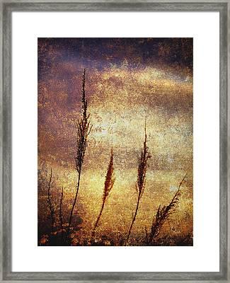 Winter Gold Framed Print by Skip Nall