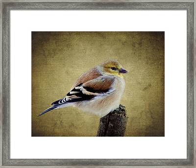 Winter Goldfinch Framed Print