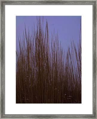 Winter Grass Framed Print by Anna Villarreal Garbis