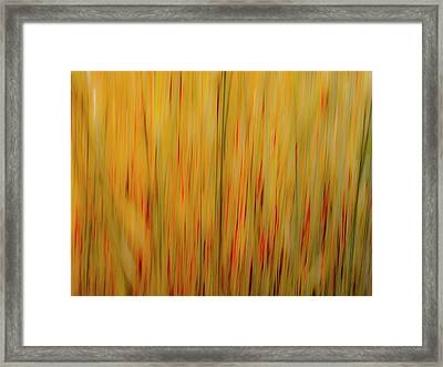 Winter Grasses #1 Framed Print
