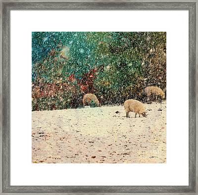 Winter Graze Framed Print