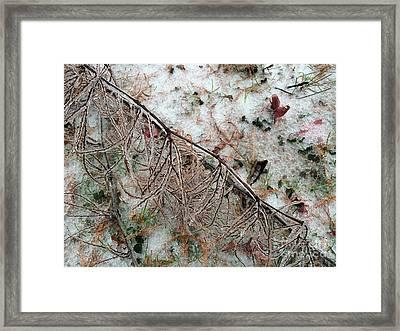 Winter Ground  Framed Print