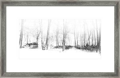Snowy Forest - North Carolina Framed Print