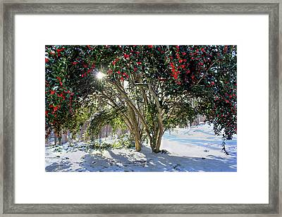 Framed Print featuring the photograph Winter Holly by Jessica Brawley
