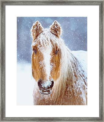 Winter Horse Portrait Framed Print by Debi Bishop