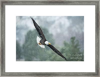 Winter Hunter Framed Print by Mike Dawson