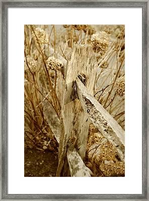 Winter Hydrangeas Framed Print by Diana Angstadt