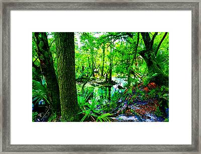 Winter In Paradise Framed Print by David Lee Thompson