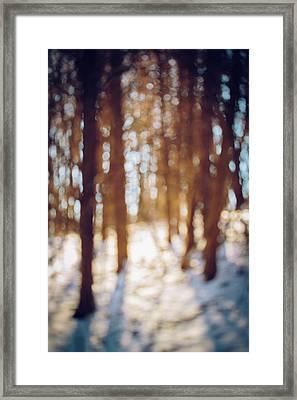 Winter In Snow Framed Print