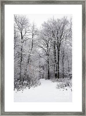 Winter In The Forest Framed Print by Gabriela Insuratelu