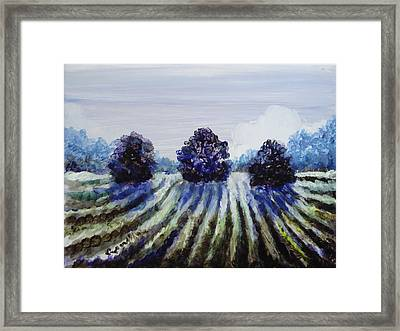 Winter In The Vineyard Framed Print by Shelley Capovilla