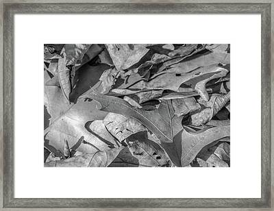 Winter Leaves Framed Print