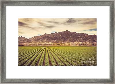 Winter Lettuce Framed Print