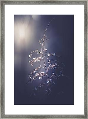Winter Light Framed Print by Shane Holsclaw