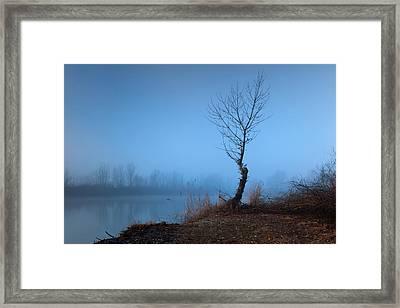 Winter Loner Framed Print