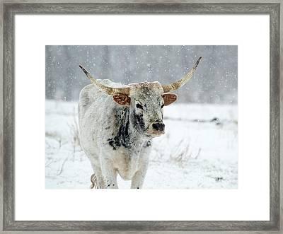 Winter Longhorn Framed Print by Mike Dawson