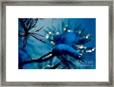 Winter Magic Framed Print by Susanne Van Hulst
