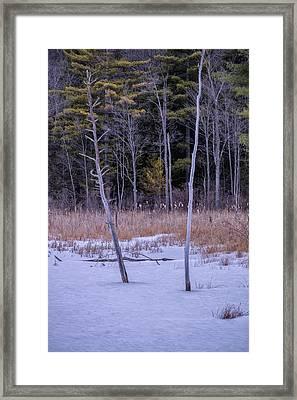 Winter Marsh And Trees Framed Print
