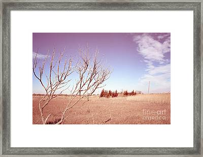 Framed Print featuring the photograph Winter Marshlands by Colleen Kammerer