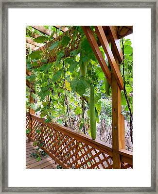 Winter Melon 4 Framed Print by Lanjee Chee