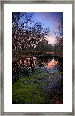 Winter Morning Repose Framed Print
