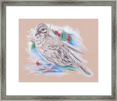 Winter Mourning Dove Framed Print