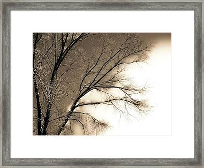 Winter Mulberry  Framed Print by Larry Ney  II