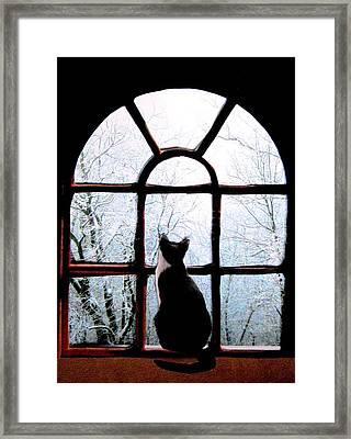 Winter Musing Framed Print