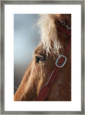 Winter Mustang Eye Framed Print