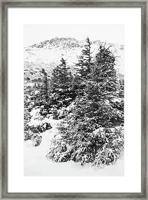 Winter Night Forest M Framed Print