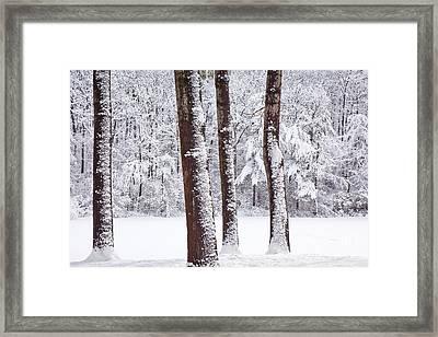 Winter On Paradise Pond Framed Print