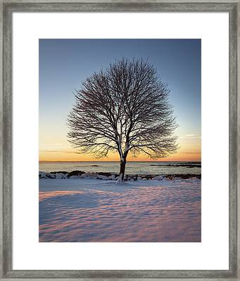 Winter On The Coast Framed Print