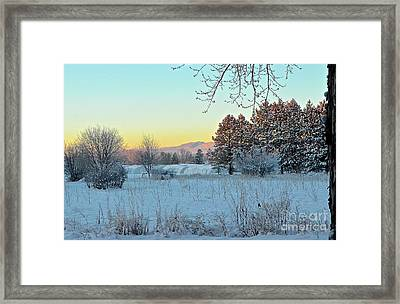 Winter On The Tree Farm Framed Print