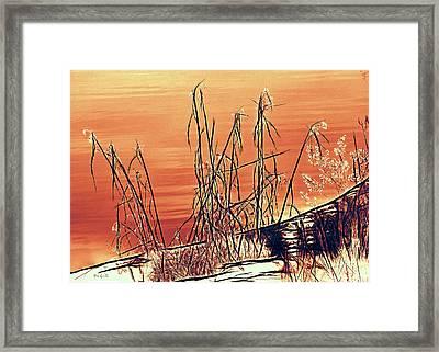 Winter Orange Framed Print by Bob Orsillo