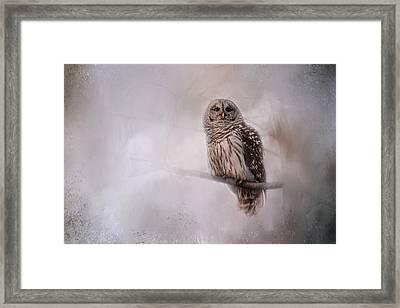 Winter Owl Framed Print by Jai Johnson