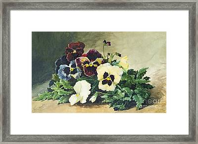 Winter Pansies Framed Print by Louis Bombled