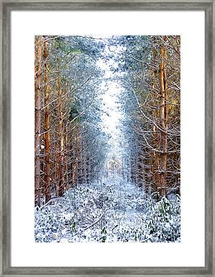 Winter Path Framed Print by Svetlana Sewell