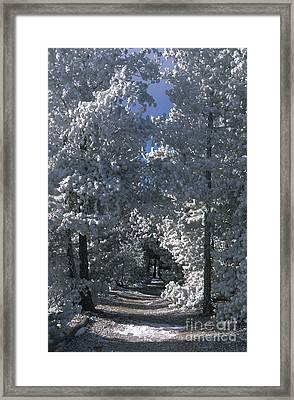 Winter Pathway Framed Print by Sandra Bronstein