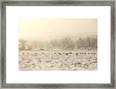Winter Playground Framed Print