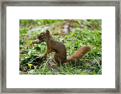 Winter Preparations Framed Print by Brent L Ander