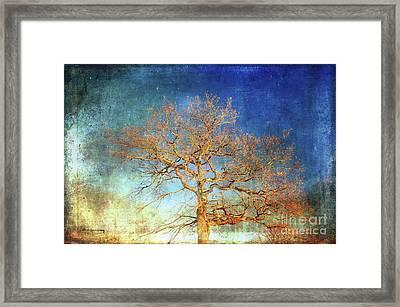 Winter Promise Framed Print
