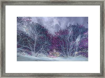 Framed Print featuring the photograph Winter Purple by Nareeta Martin